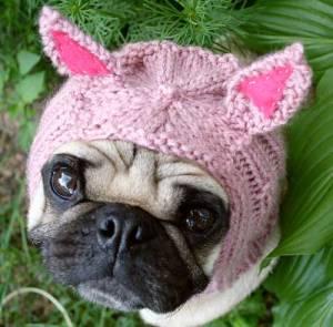 pug-pig-hat